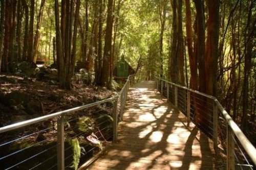 Rainforest boardwalk - Blue Mountains Tours from Sydney