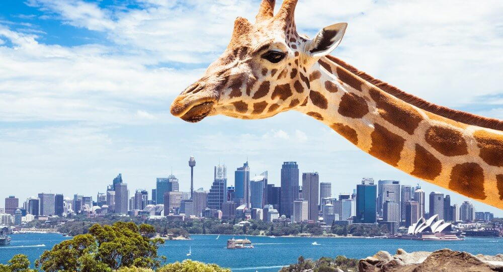 Sydney Tours R Us Best Sydney attractions Taronga Zoo